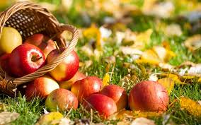 green and red apples in basket. fresh apple fruit wallpaper · basket of red apples green and in