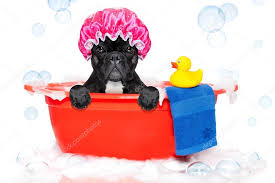 dog taking a bath in a colorful bathtub with a plastic duck stock photo