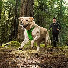 Ruffwear Harness Size Chart 10 Best Dog Harnesses For 2019 Our Top Walking Harness For
