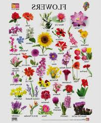 elegant image of diffe types of flowers with pictures and their names all flower types list