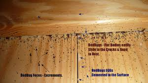Small Brown Bugs In Bedroom Bed Bugs Faqs Pest Control Of Bed Bugs Fleas And Cockroaches