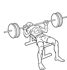 Image result for bench press