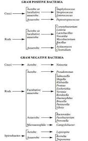 Gram Staining Principle Procedure And Results Learn
