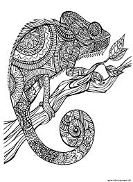 Small Picture adult cameleon patterns Coloring pages Printable