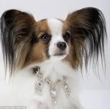 top dog the amour amour dog collar weighs in at 52 carats and is encrusted