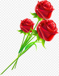 rose flower love gift woman rose