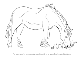 horses drawings. Simple Horses How To Draw A Horse Eating Grass In Horses Drawings