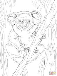 inspiring koala coloring page friendly female free printable pages