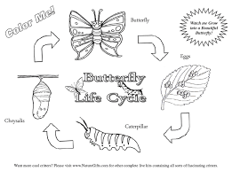 Signup to get the inside scoop from our monthly newsletters. Printable Pictures Of Caterpillars Large Selection Of Free Butterfly Coloring Pages From Thebutterfl Butterfly Life Cycle Life Cycles Butterfly Coloring Page