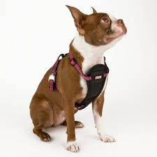 Petlove Dog Harness Size Chart Brighten Up That Fall Walk With The Kong Reflective Dog
