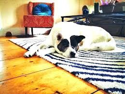 pet friendly area rugs pet friendly area rugs strikingly best for pets amazing awesome marvelous rug