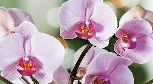 Ben jij een orchidee of een paardenbloem? - Puur & Open Coaching