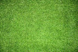 grass field texture. Grass Field Texture