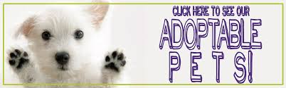 animal shelter dogs for adoption. Brilliant Shelter Find Adoptable Pets Upcoming Adoption Specials To Animal Shelter Dogs For
