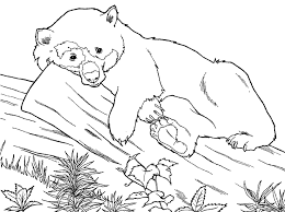 Small Picture bear black white free bear animal coloring pages Gianfredanet