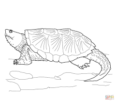 Small Picture Common Snapping Turtle coloring page Free Printable Coloring Pages