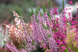 11 Types of Shrubs That <b>Flower</b> in Early <b>Spring</b>