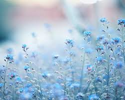 nature backgrounds tumblr. Flower Tumblr \u2013 Live HD Wallpapers, Photos Nature Backgrounds A