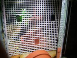 cichlids com diy divider diy aquarium divider in cichlid fish tank