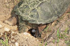 nesting sites for pet turtles