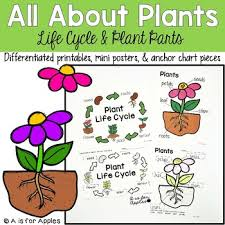 All About Plants Life Cycle Parts