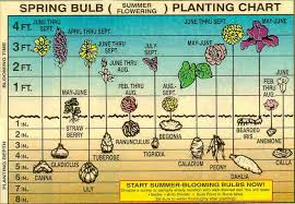 Chart Showing The Proper Planting Depth And Blooming Time Of
