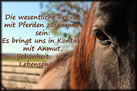 Pferde Sprüche Zitate Marketingfactsupdates