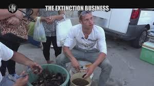 Video Le Iene PASCA Extinction business I SERVIZI MEDIASET.