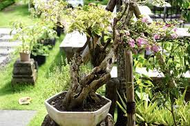 large container gardens