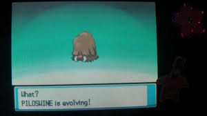 How To Evolve Piloswine Into Mamoswine Pokemon Heart Gold And Soul Silver