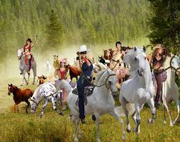 wild horses mustang wallpaper. The Lone Rider And Sexy Mustang Cowgirls Images Other Begin Rounding Up Beautiful Wild Mustangs Wallpaper Horses