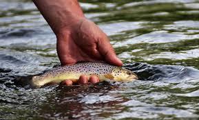 Wny Fly Fishing Wny Fly Fishing Stream Report 6 8 2019