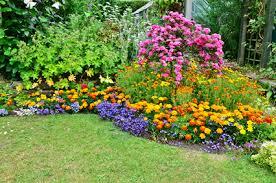 flowers for garden. A List Of Perennial Flowers For Your Garden. Garden