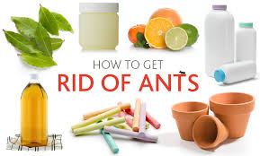 how to get rid of ants ways to get rid of ants using common household items get rid of ants vinegar get rid of ants in kitchen dishwasher