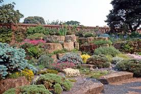 succulents thrive in the crevices and graveled beds of an english rock garden