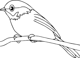 Small Picture American Robin Coloring Page How To Draw Robin Bird Coloring Page