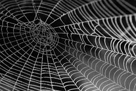 Spider Web Pattern Impressive Computing With Spiders' Webs Science And Technology Research News