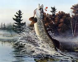 Image result for tiger musky cartoon pics