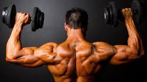 musclel