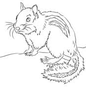 Small Picture Prairie dog coloring pages Free Coloring Pages