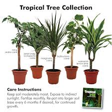 excellent tropical house plants names extraordinary of indoor