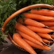 wild carrot seed for sale
