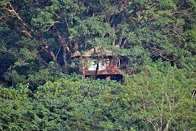 luxury tree house resort. Vythiri Resort: Luxury Tree House Resort