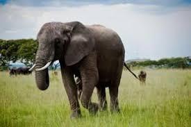 elephant essay in kannada  elephant essay in kannada