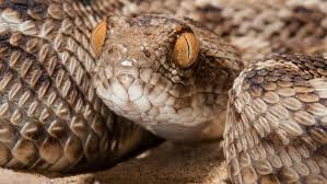 710 likes · 11 talking about this. A Pill For Heavy Metal Poisoning May Also Save Snakebite Victims Science News