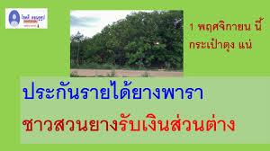 เงินส่วนต่างยางพารา สูตรคำนวณว่า จะได้เงินกี่บาท ธกส.โอน 1 - 15 พ.ย.62 นี้  - YouTube