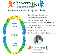 Permanent Teeth Eruption Chart Permanent Tooth Eruption Pediatric Dentist In Frisco