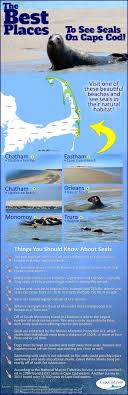 395 Best Cape Cod Activities Events Images On Pinterest  Cape Cod Weather Cape Cod September