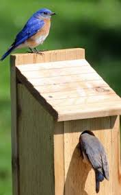 woodworking projects for kids bird house. 25+ unique bird feeder plans ideas on pinterest | houses diy, wooden feeders and house woodworking projects for kids