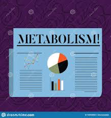 Text Sign Showing Metabolism Conceptual Photo Chemical
